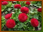 Pompons rouges