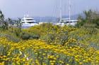 Port  fleuri la Seyne sur mer