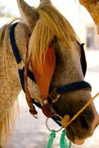Portrait d'un pauvre cheval
