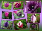 Pot-pourri de tulipes