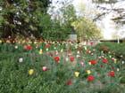 Pour fans de tulipes