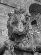 Pour finir avec la série des lions