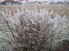 Première neige en Allemagne