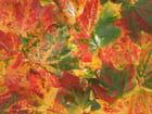 Premières feuilles d'automne