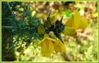 Premières fleurs champêtres de l'hiver