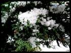 Premières neige de Novembre en Normandie