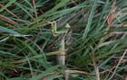 Princesse des herbes