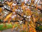 Printemps en automne au luxembourg