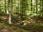 Printemps en forêt