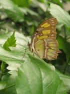 Profil du papillon