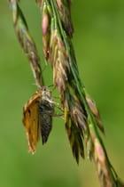 Profil papillon