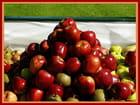 Profusion de fruits