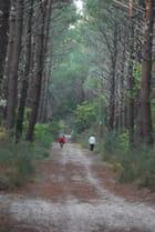 promenade dans la forêt Landaise