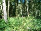 Promenade en forêt l'été