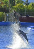 Propulsion delphine !