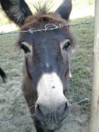 Quel âne!