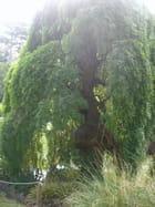 Quel arbre