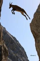 Quel saut !!!