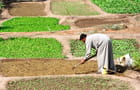 Quelques légumes cultivés avec amour...