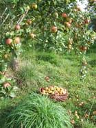 Ramasse tes fruits