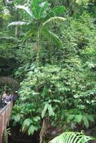randonnée en forêt tropicale humide
