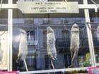 Rats et mulots à Paris