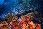 Récife Safaga