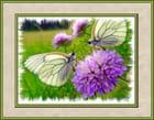 Reflet de papillon