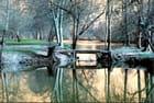 reflets d'hiver sur la Charente
