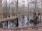 reflets dans le marais