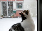 regarder tomber la neige