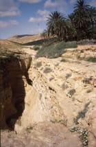 Région de Gafsa (4)