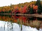 relets d'automne