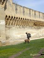 Rempart: Avignon