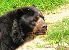 rencontre avec l'ours