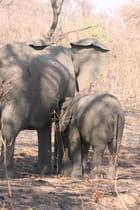 Repas de l'éléphanteau