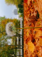 Résister au vent d'automne