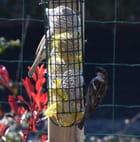 restaurant pour oiseaux