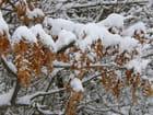 Restes d'automne sous la neige