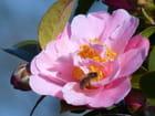 Retour des abeilles au jardin