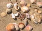 Réunion de coquillages