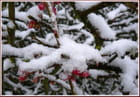Réveil enneigé du 11 mars 2013 - 2