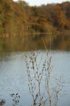 Rêverie d' automne