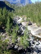 Rivière (3)