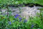 Rivière La Futaie dans le parc des Oblats