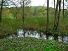 Rivière la Lézarde,Parc de Rouelles
