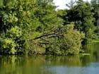 Rivière le Beuvron à Cellettes