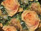 Ronde du bouquet de la mariée