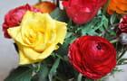 Rose et renoncule
