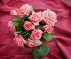 Rose et velours